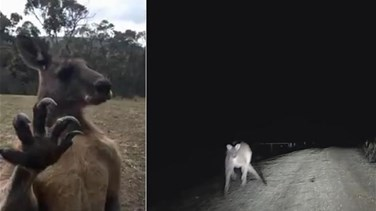 Is This The Scariest Animal In The World These Videos Say It Is