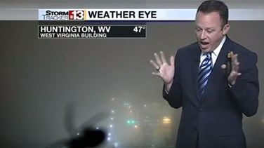 [VIDEO] Weatherman Screams In Terror On Live TV As Spider Crawls On Camera Lens