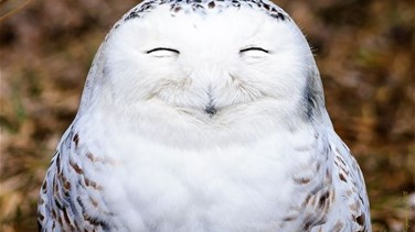 [PHOTOS] Adorable Laughing Animals That Cant Fail To Make You Smile