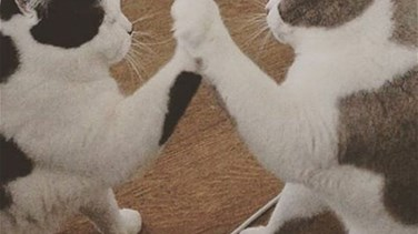 Three Pet Cats Launch into a Game of Pat-a-Cake