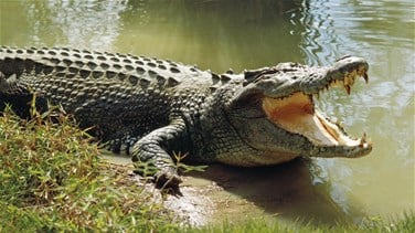 Lebanon News - South African guide killed At Crocodile Farm Outside Cape Town