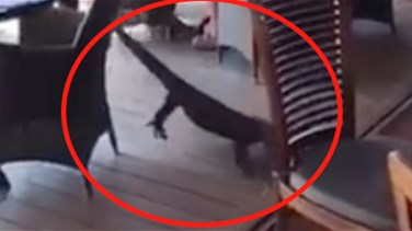Lebanon News - VIDEO: Heroic Waitress Drags Monster Lizard From Restaurant