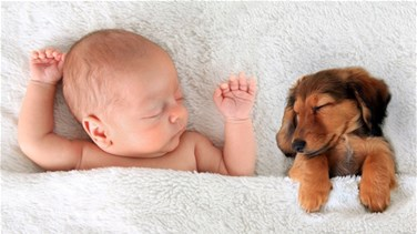Lebanon News - Can Puppies Protect Babies From Allergies And Obesity?