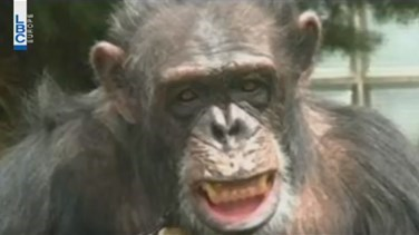 Lebanon News - REPORT: Chimps are not people, cannot be freed from custody -New York court