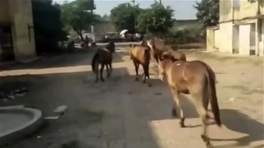 Lebanon News - Donkeys Jailed For Eating Plants Outside Prison