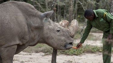 Lebanon News - World's Last Male Northern White Rhino Dies