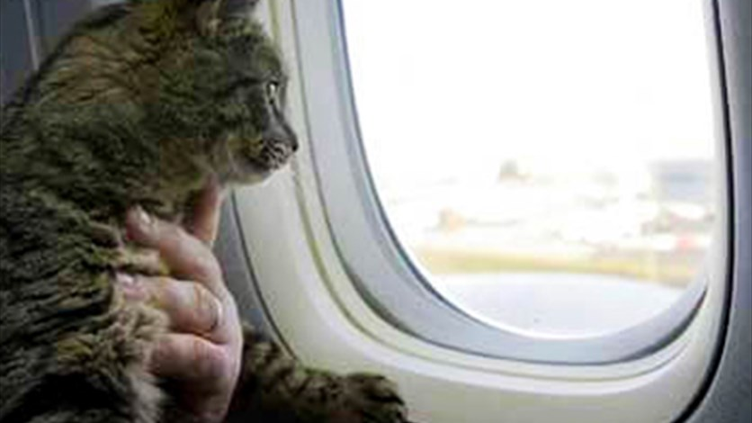 Cat on a plane delays flight for three hours