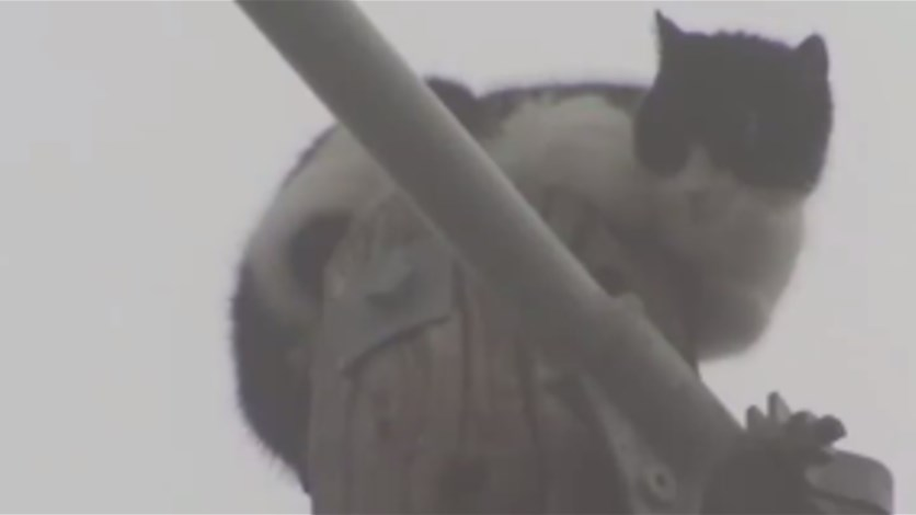 Cat Named 'Fat Boy' Finally Rescued After 9 Days Atop Power Pole