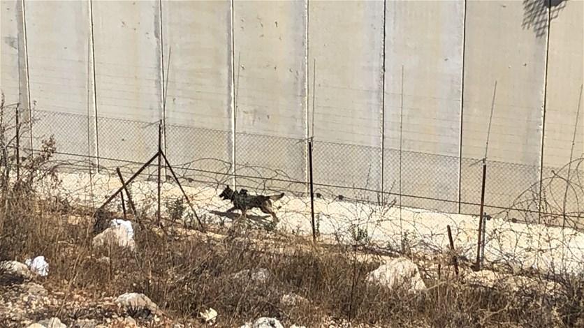 اسرائيل تطلق كلبا مجهزا بكاميرات مراقبة بين الجدار الاسمنتي والسياج التقني... (صورة)