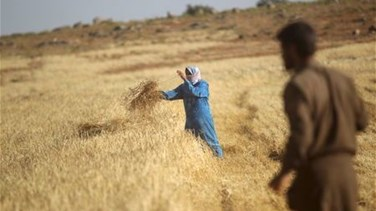 Syrian food crisis deepens as war chokes farming