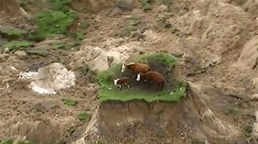 [VIDEO] Three Cows Stranded On Island Of Grass After New Zealand...