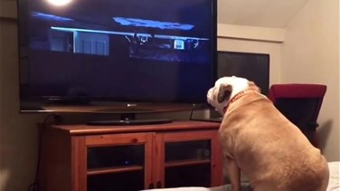 [VIDEO] Horror Movie-Watching Dog Tries To Warn Characters Of Danger