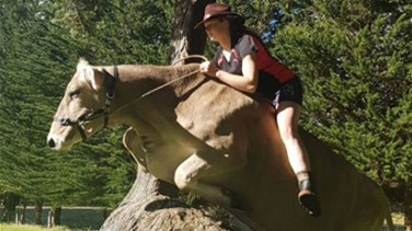VIDEO - Girl Trains Cow To Jump Like A Horse – And It's Amazing