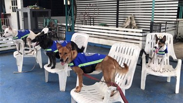 """Smart Vest"" Turns Stray Dogs Into Thailand's Street Guardians"