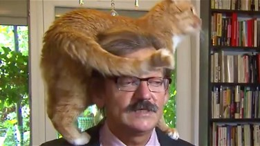 VIDEO – TV Expert's Cat Climbs On His Head In The Middle Of Interview