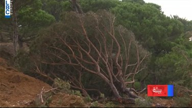 Popular Videos - What is happening to the pine forests of al-Homsieh, Jezzine?