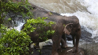 Six elephants die after falling into waterfall in Thailand