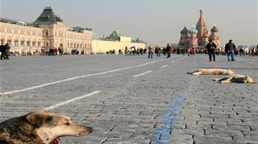 Moscow rounds up stray animals, kills rats over coronavirus fears